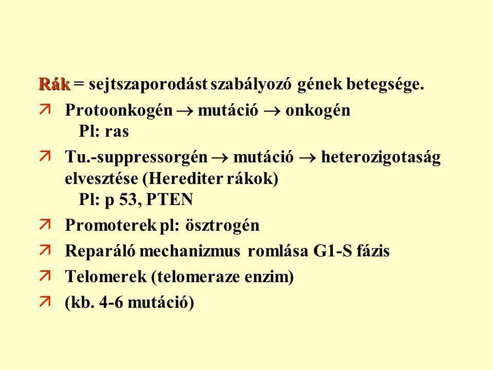 endometrium rák ösztrogén)