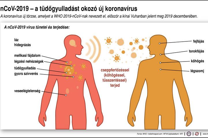 A helmint fertőzés okai, Ostorféreg-fertőzés