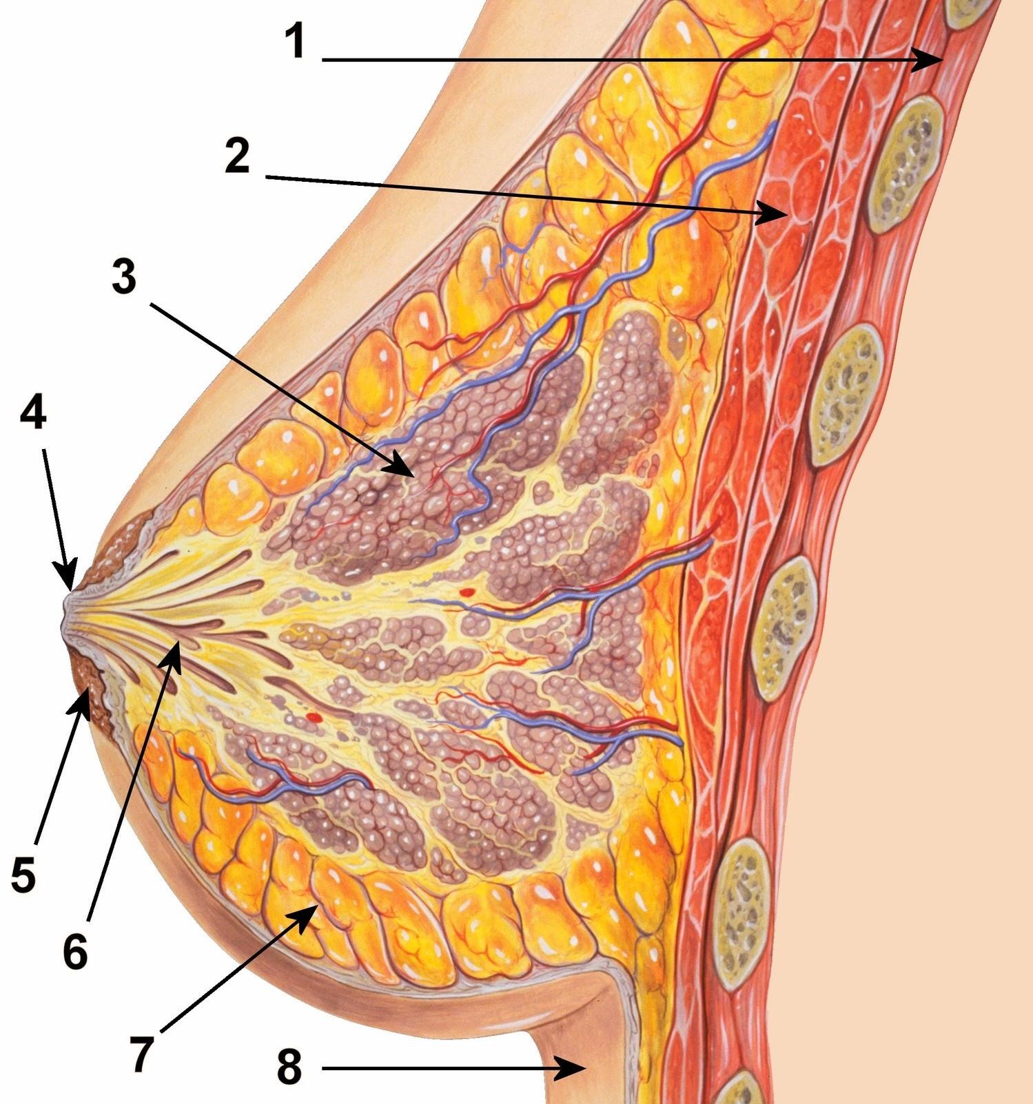 hpv intraepithelialis elváltozás