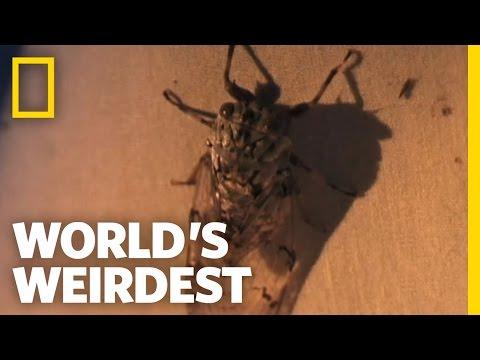 a paraziták papillómákkal eltűnnek