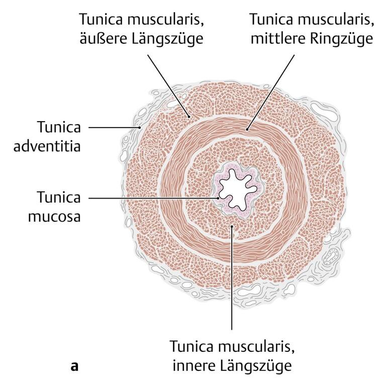 a fityma genitális szemölcsei)