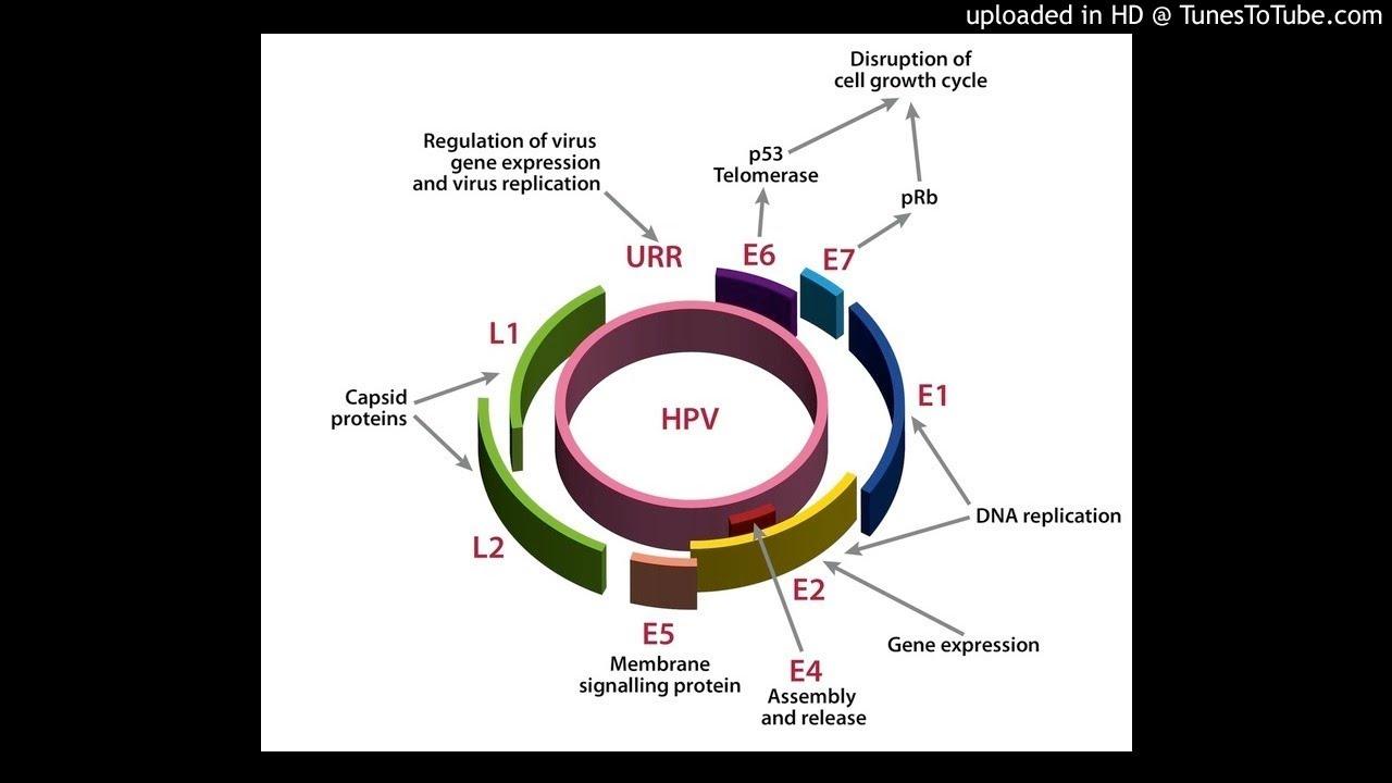 A hpv vírus dat een soa