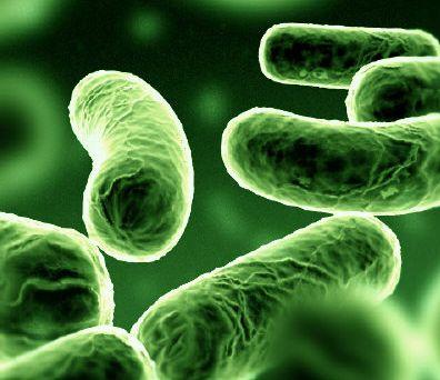 élő baktériumok