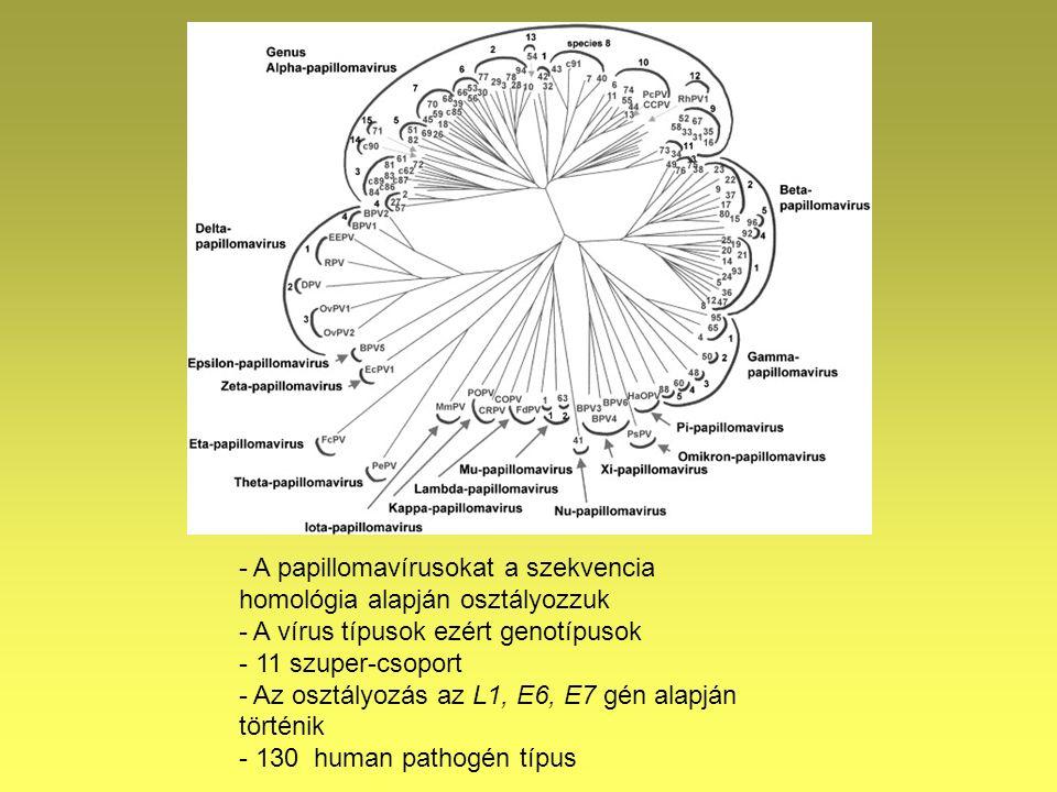 humán papillomavírus genotípusok hpv alternatív gyógymód