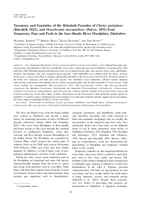 a clarias gariepinus helmint parazitái