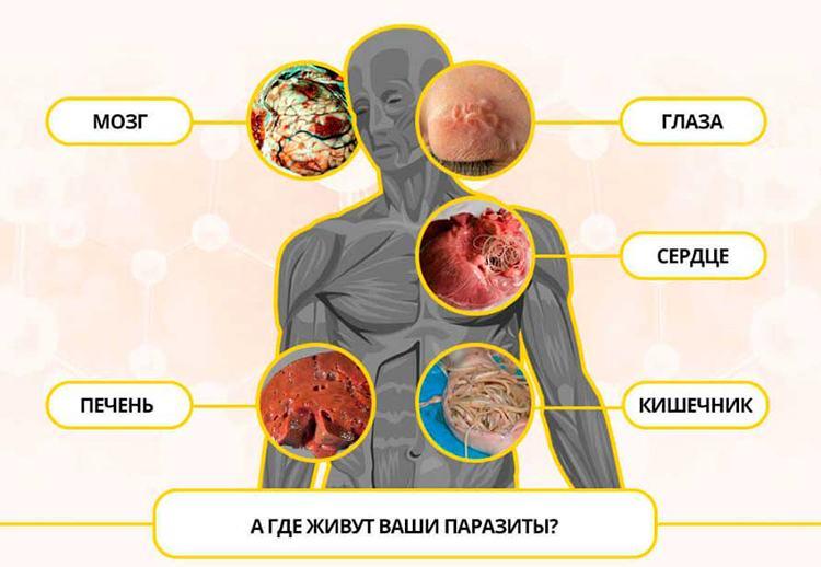 Parazita gyógyszeres fórum