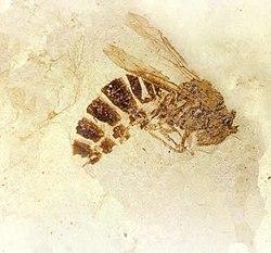 hymenoptera paraziták