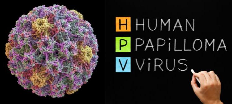humán papilloma HPC