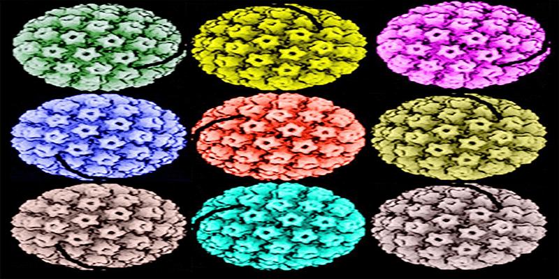 45. papillomavírus vírus)