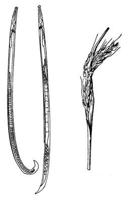 fonálféreg elleni bio netede