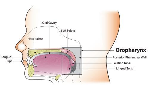 Az orális HPV fertőzés kockázata magasabb a férfiak körében