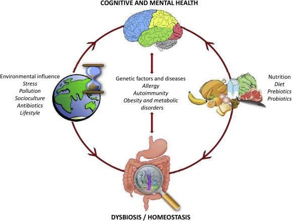 dysbiosis bél mikrobiota)