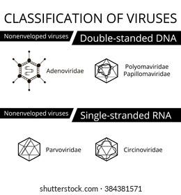 A vírusok osztályozása