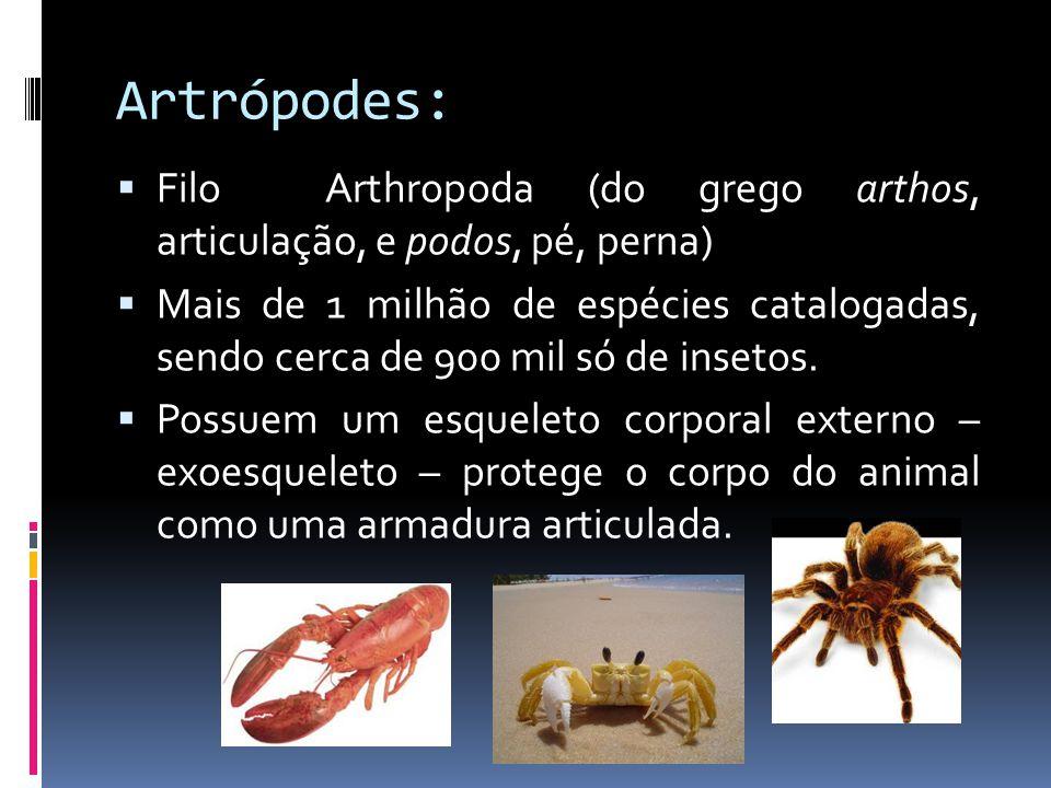 nemathelminthes gambar anatómia)