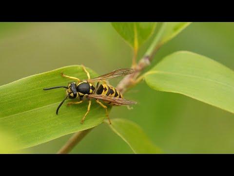 a méhnyak eróziója a parazitáktól