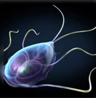 Paraziták kezelése felnőttekben. Milyen bélférgek kerülhetnek szervezetünkbe?