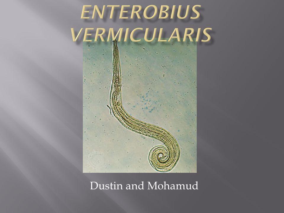 enterobiosis kudarc gyermekeknél