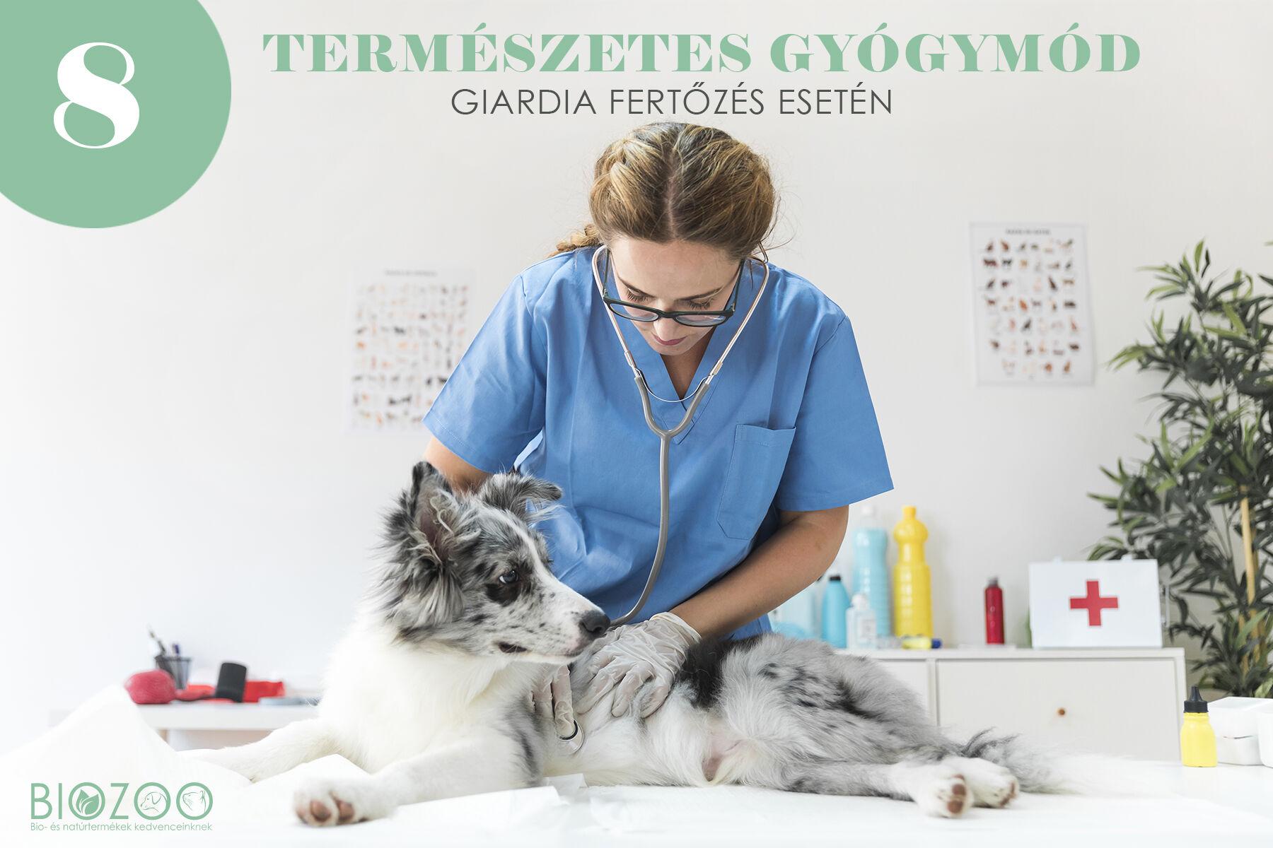 giardia kutya természetes gyógymódok