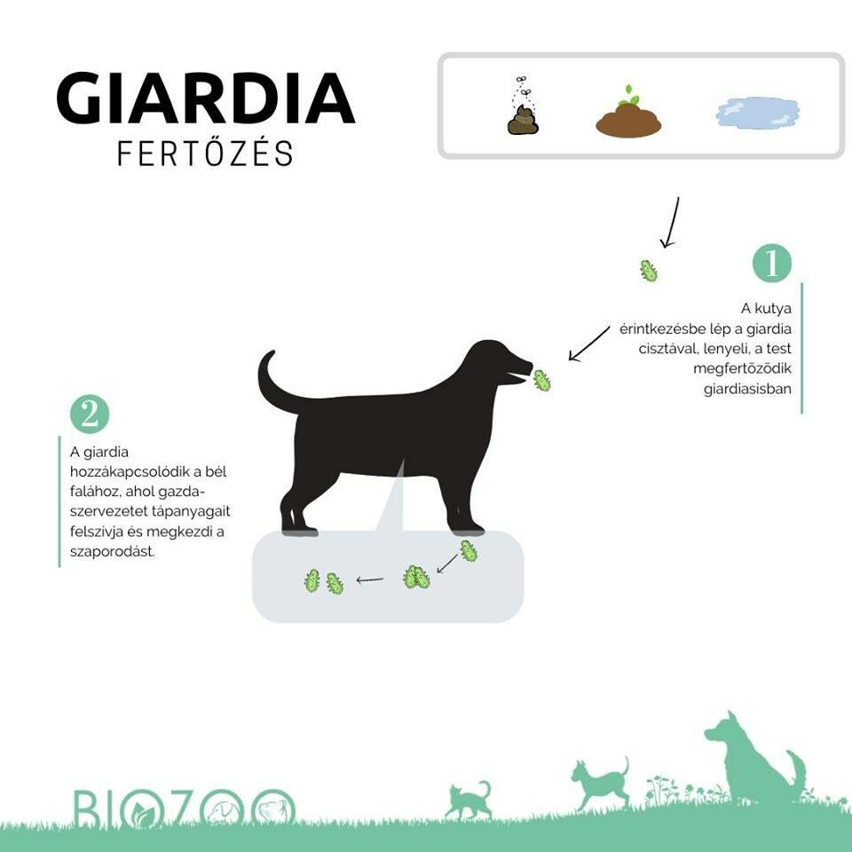 giardia ember természetes gyógymódjai