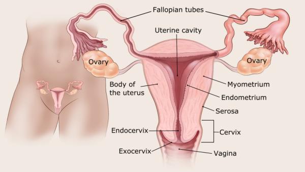 endometrium rák tünetei betegtörténetek