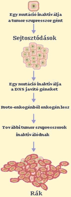 Daganatos betegségek