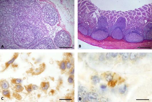 neorickettsia helminthoeca kezelés)