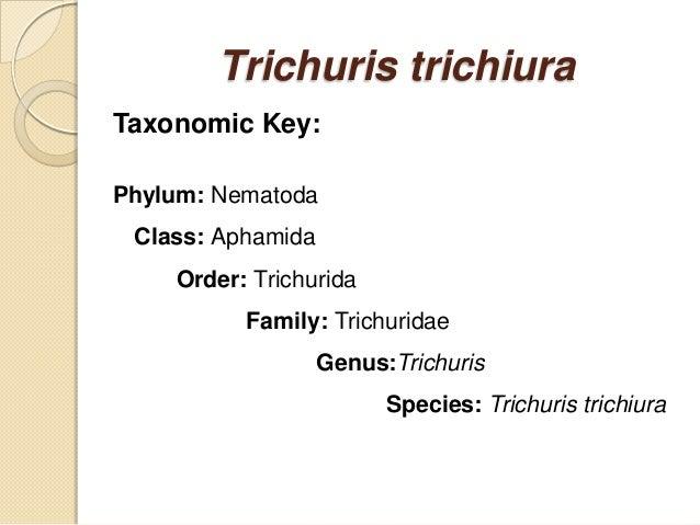 Phylum aschelminthes kép, Phylum aschelminthes képek