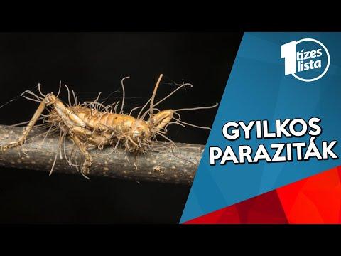rovarok, amikor eltávolítják a parazitákat a testből