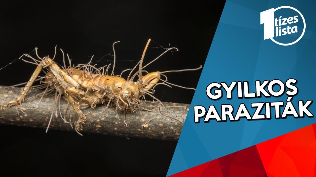 Parazita gyilkos tabletta. 3 gyilkos kórral is végezhet egyetlen szer