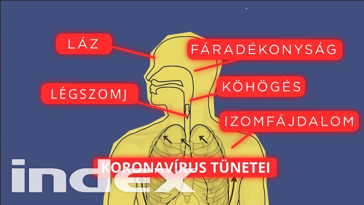 a gömbférgek tünetei
