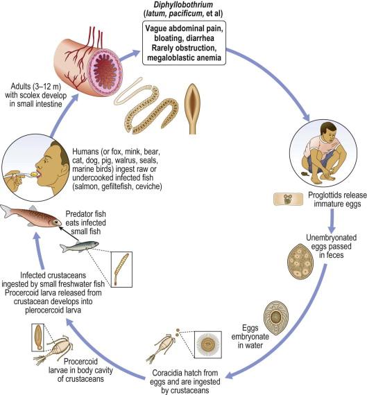 helmintikus kezelési rendek