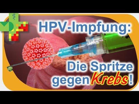 hpv impfung tk)