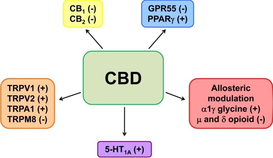 endokrin rák áttekintése felnőttkori gyógyszerférgek kezelési rendszere