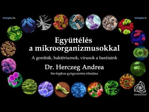 baktériumok vagy vírusok