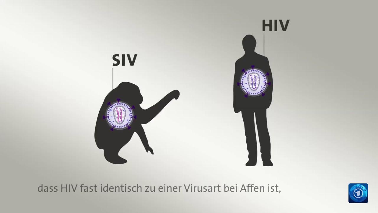 Aids - German-Hungarian Dictionary - Glosbe