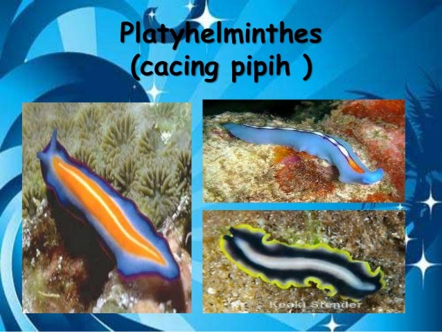 Platyhelminthes cacing. ppt, Aszcariasis kifejezés