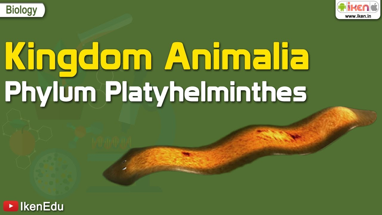 A platyhelminthes példák listája. Platyhelminthes példák