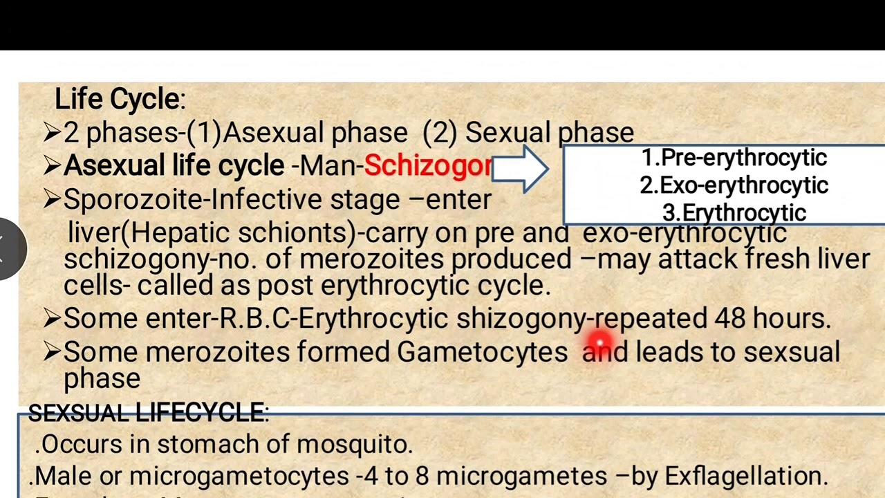 gyógyítja a parazitákat a nano-toxin ellen)