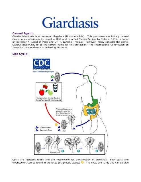A giardiasis ornidazol kezelése - Giardia ellenállása
