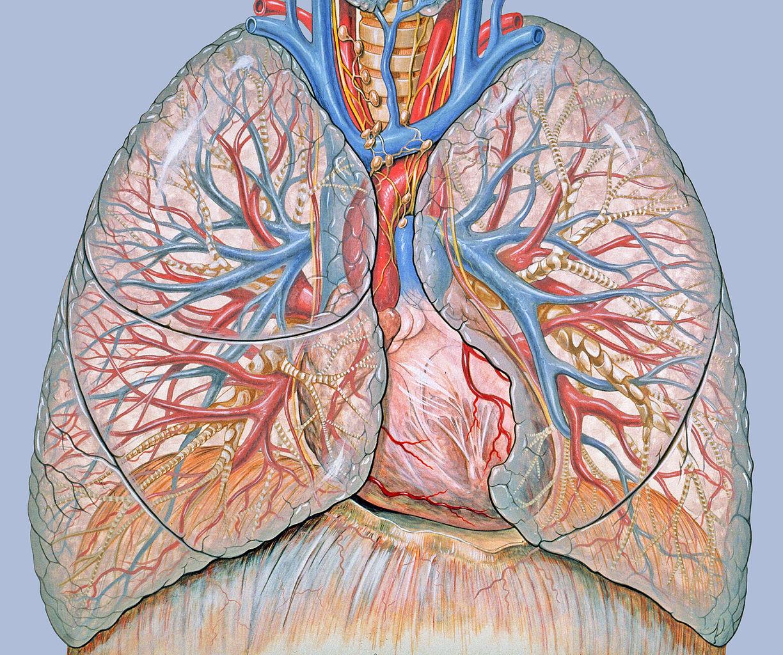 Tüdőrák - Mennyi a túlélés esélye?