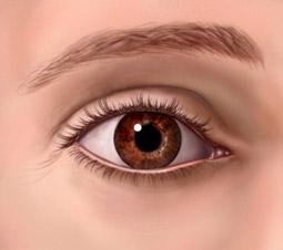 a belső szemhéj növekedése