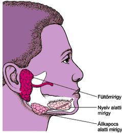 nyálmirigy rák tünetei