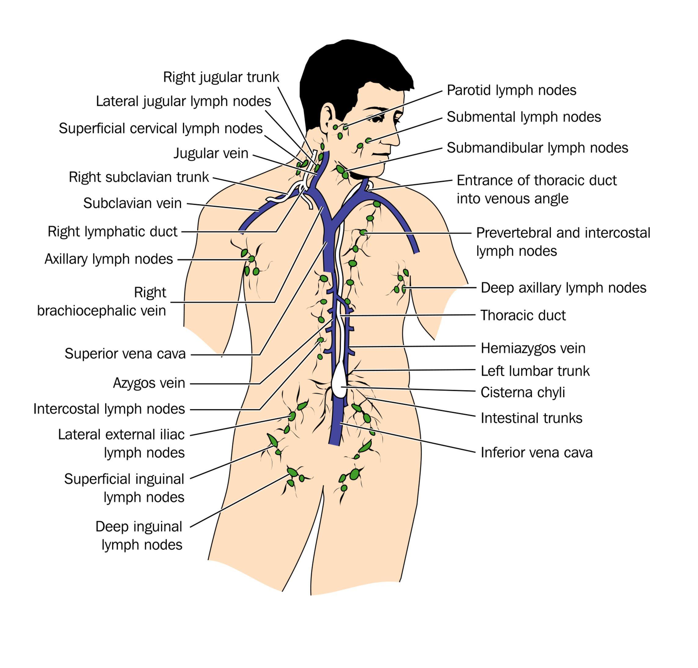 Emberi papillomavírus nőkben