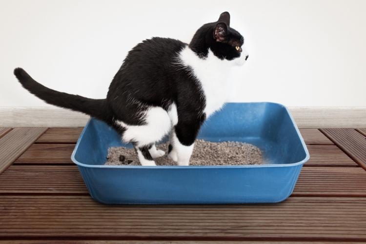 Féregtelenítési kisokos macskagazdiknak