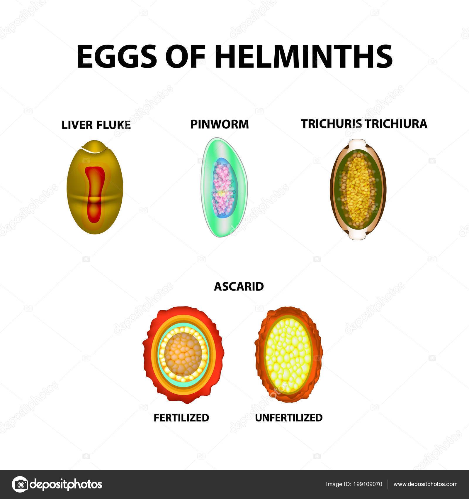 oxiuros tojás