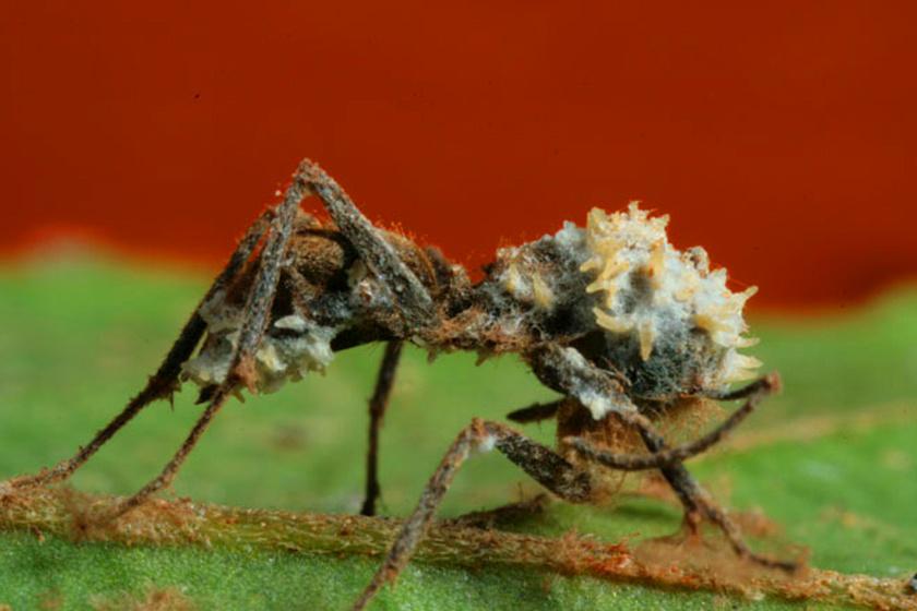 paraziták megosztása