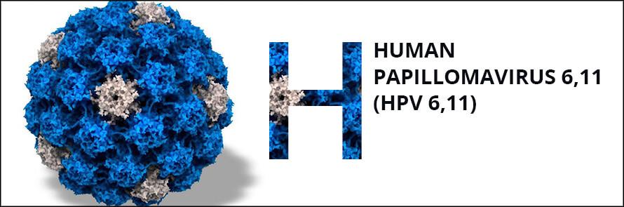 papilloma vírus 6 11 condyloma hpv természetes kezelés