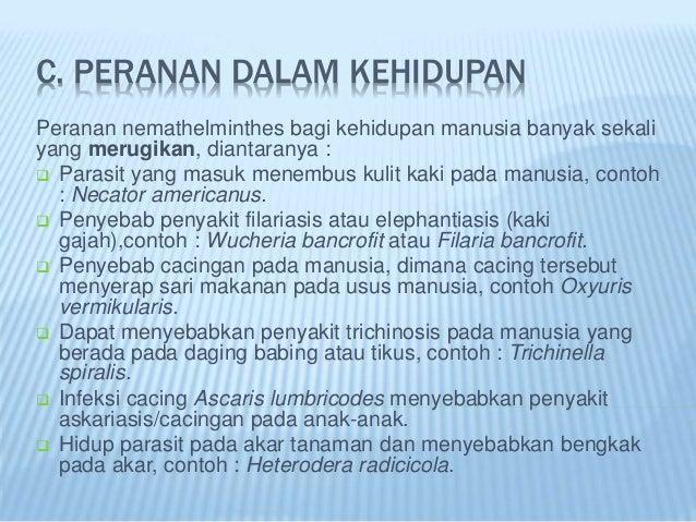 contoh nemathelminthes dan peranannya)