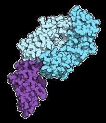 májrák immunterápia)
