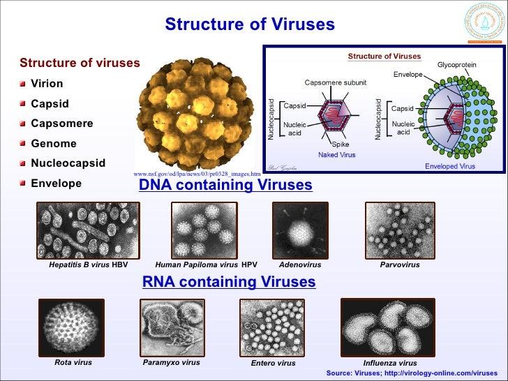 papilloma vírus rna
